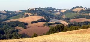 03_Azienda_Monte_bello_da_Vergineto